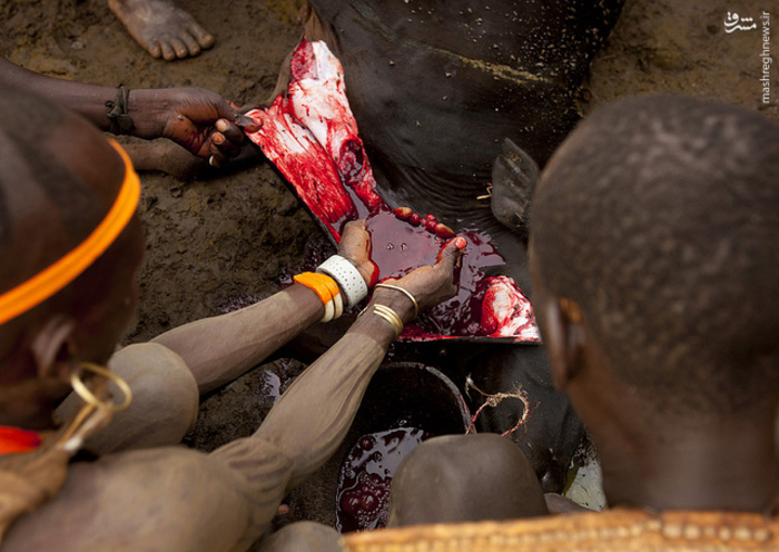 قبیله خونخوار, قبیله خون آشام