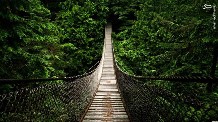 پل معلق کاپیلانو در ونکوور کانادا,عکس پل معلق روی جنگل در ونکوور کانادا,عبور پل معلق روی جنگل های کانادا,پل معلق روی جنگ در کانادا,پل معلق روی درختان جنگل